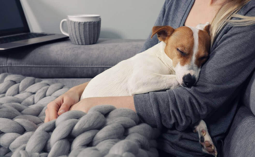 Dog cuddling with owner and blanket
