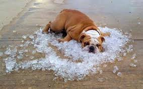 Dog cooling down on ice due to air conditioner overheating